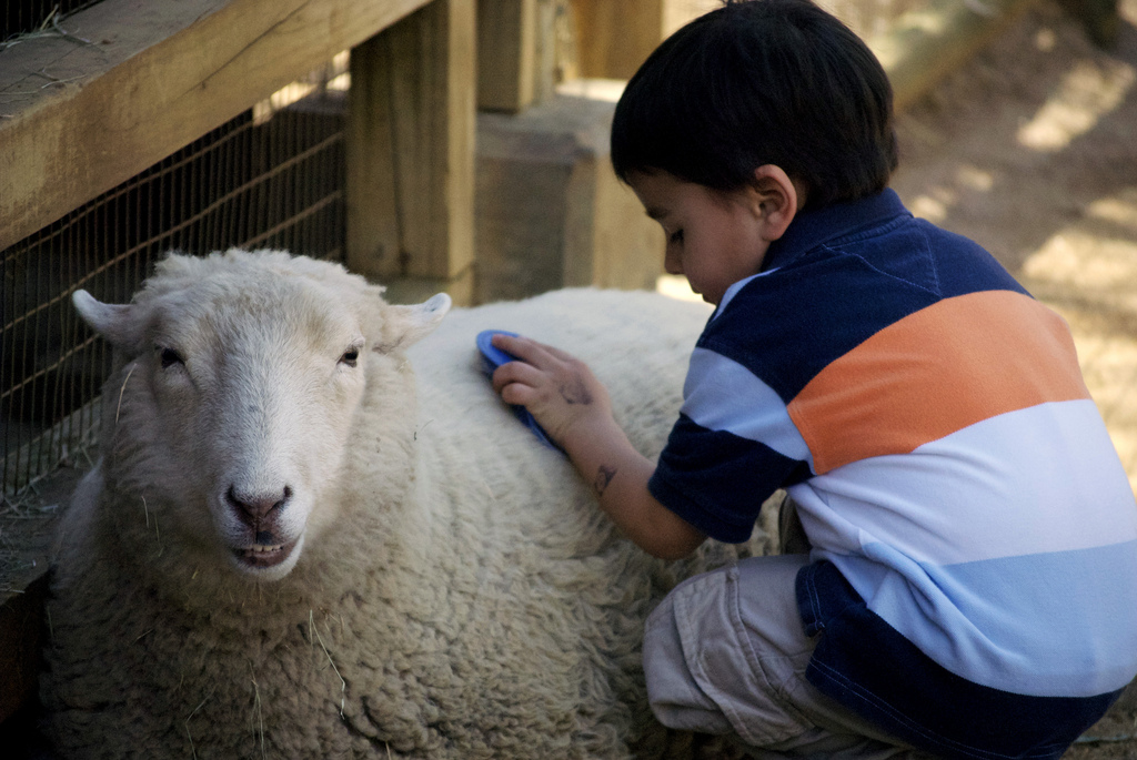 Animal-Assisted Therapy for Kids, Teens